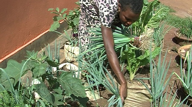 Herbs & Spices | Access Agriculture